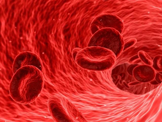 Proteína indica predisposição a doenças cardiovasculares mesmo em pessoas saudáveis